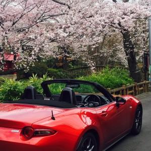 2016.4 釣鐘池の桜